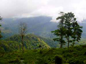 Rainforest and Remote Land