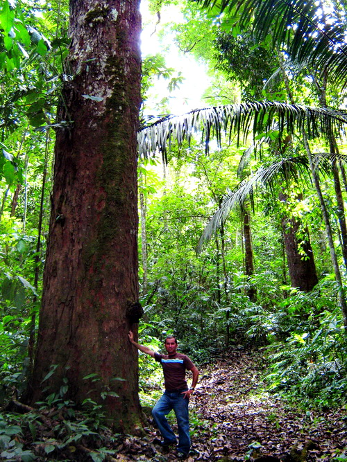 Large Growth in Primary Forest