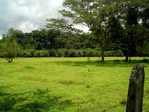 Pasture and Palm Oil For Sale